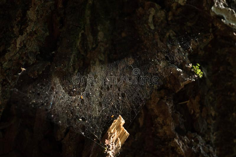 Close-up photo of natural spiderweb. textured background. In grunge technique stock photos