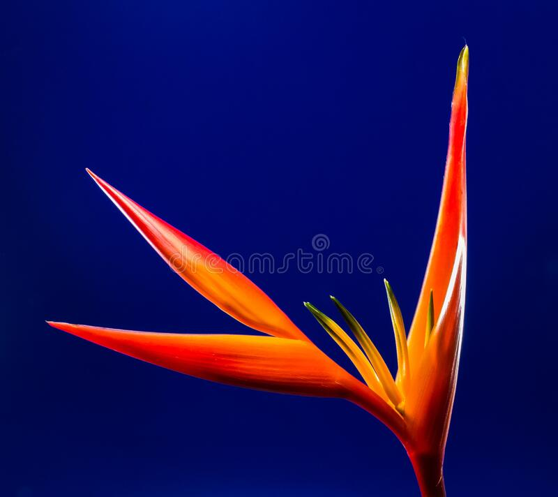 Close-up Photo Of Orange Flower Free Public Domain Cc0 Image