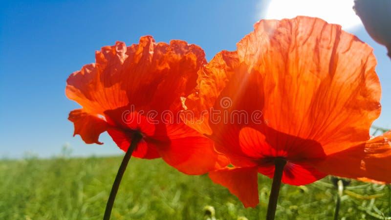 Close Up Photo of Orange Petaled Flower stock photo