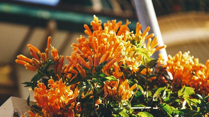 Close Up Photo of Orange Petaled Flower royalty free stock photo