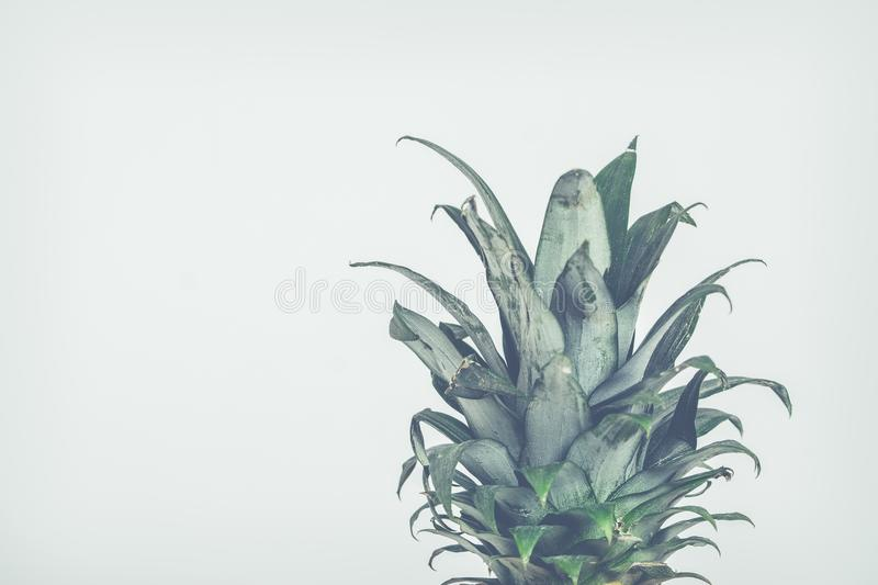 Close-Up Photo of Pineapple Leaves stock images
