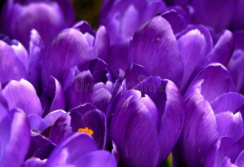 Close Up Photo Of Purple Clustered Flower Free Public Domain Cc0 Image