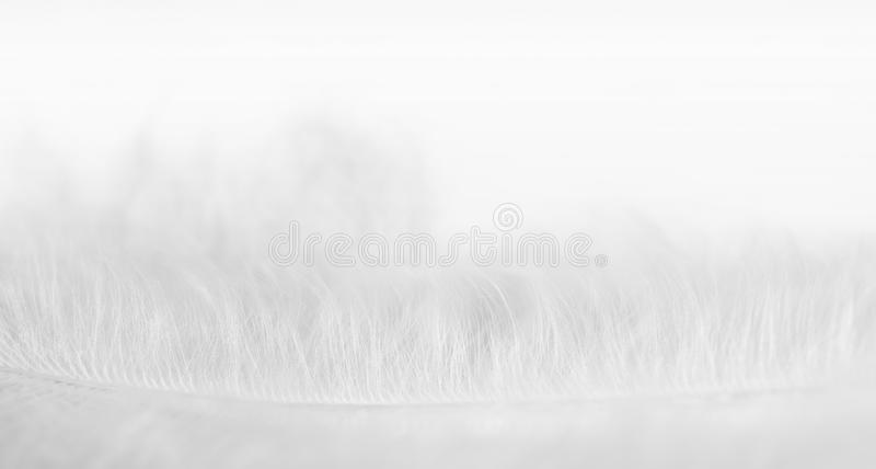 Download Close-up Photo Of Softness White Feather Stock Photo - Image: 11817394