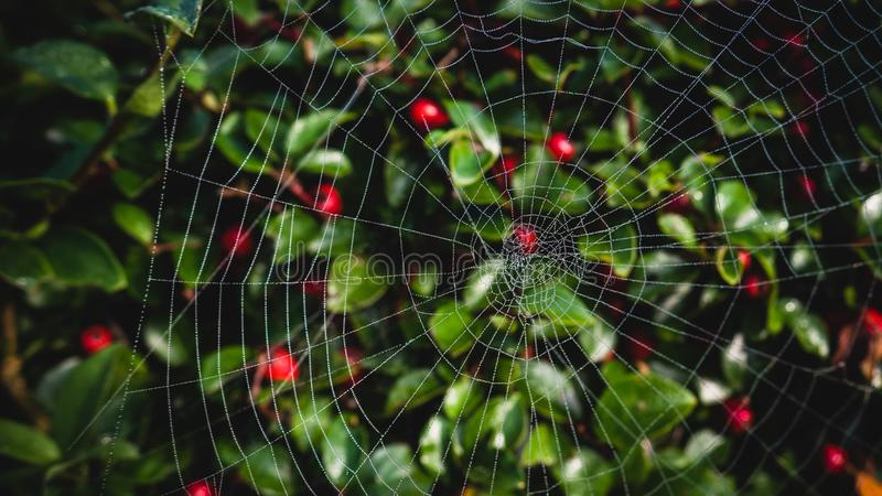 Close-up Photo of Spider Web stock images