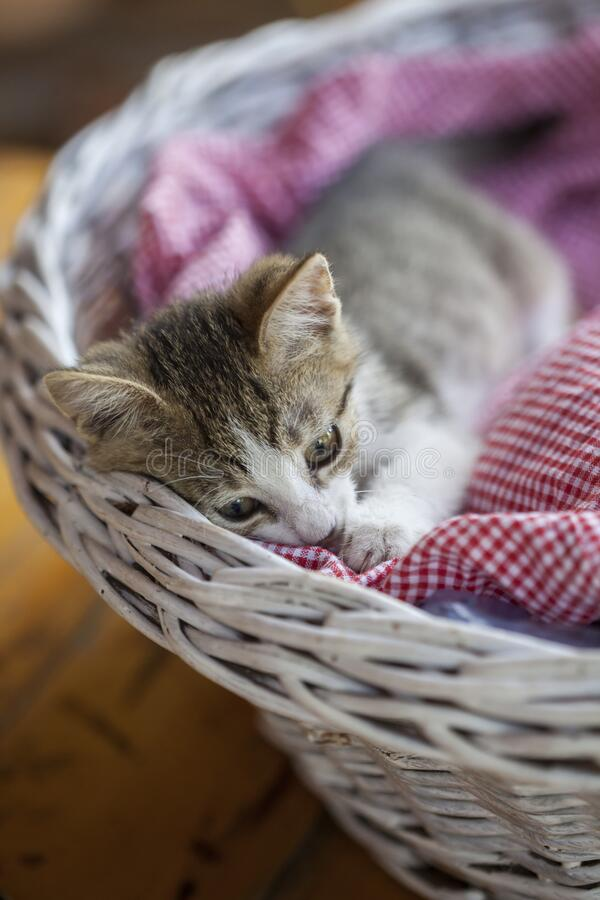 Little kitty looking up stock images