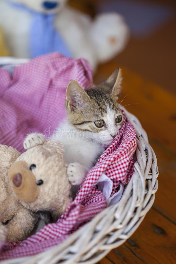 Little kitty looking up royalty free stock photography