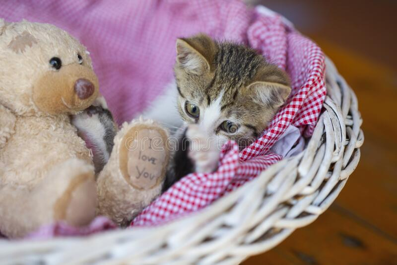 Little kitty looking up stock photography