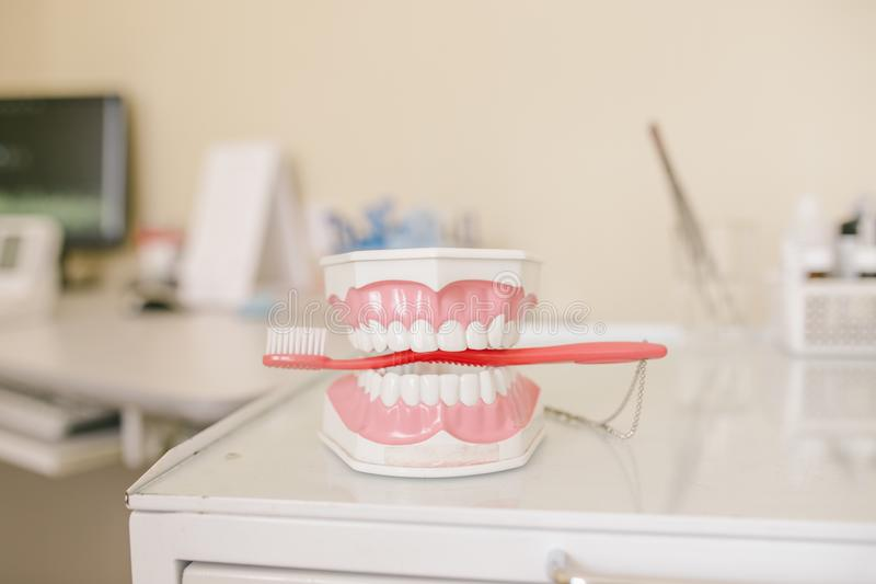 Close up photo of teeth model denture with red tooth brush royalty free stock image
