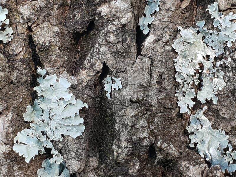 Close-up Photo of Tree Bark royalty free stock image