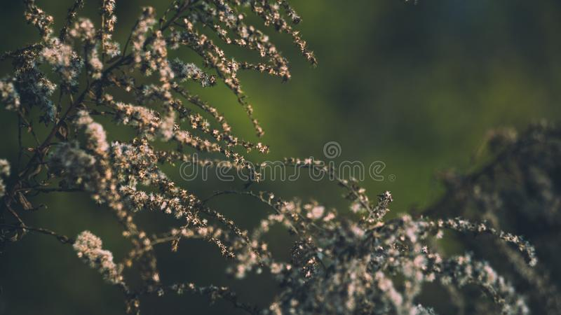 Close Up Photo of Tree Branches stock photos