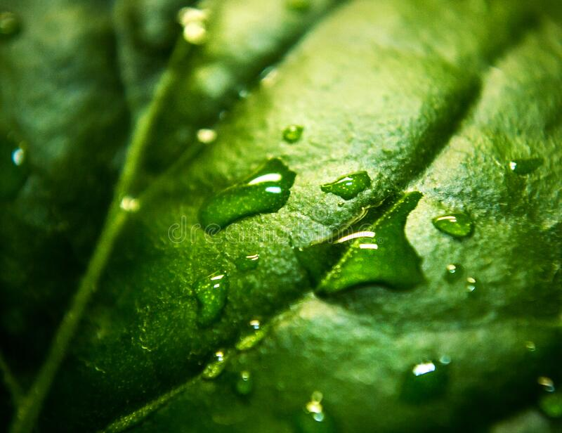 Close Up Photo a Water Moist Green Leaf royalty free stock photos