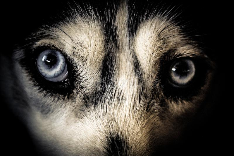 Close Up Photo of White and Black Short-furred Animal royalty free stock images