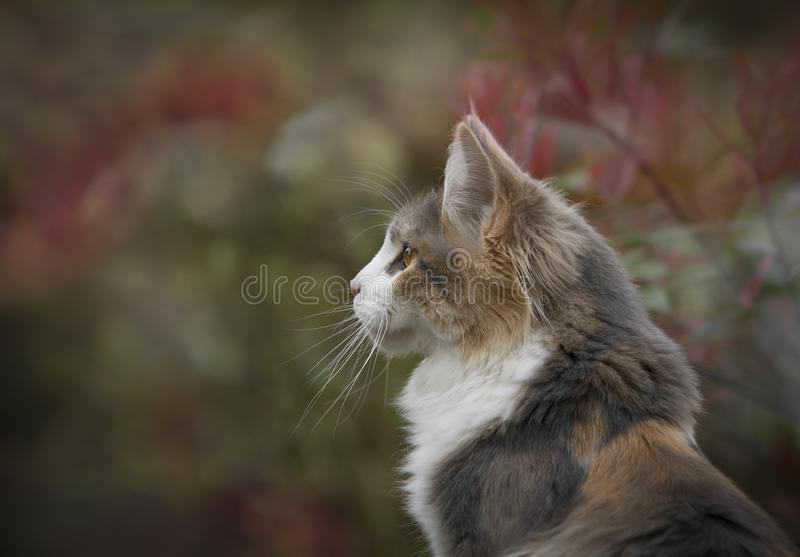 Close Up Photo of White and Brown Feline stock photos