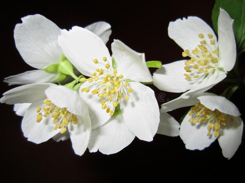 Close Up Photo of White Petaled Flower royalty free stock photos