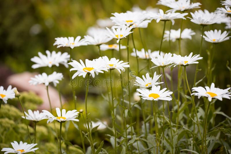 Close Up Photo of White Petaled Flower Plant stock photography