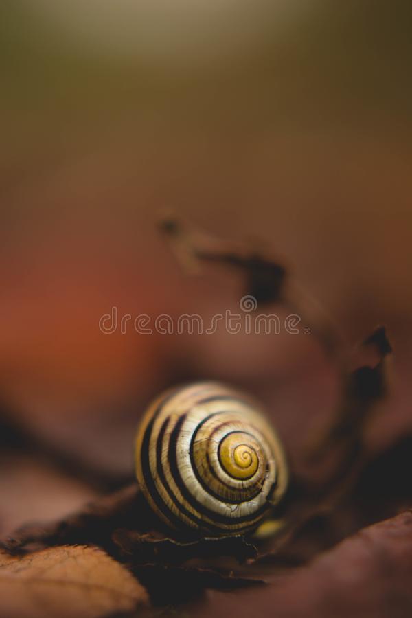 Close Up Photo of White Snail royalty free stock photos