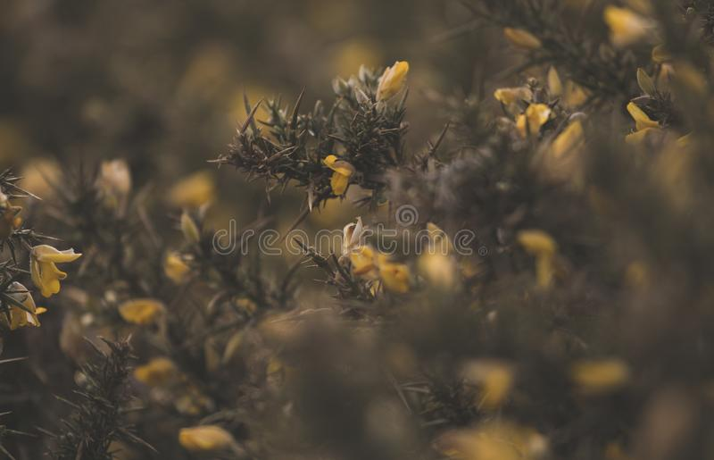 Close Up Photo of Yellow Flower royalty free stock images