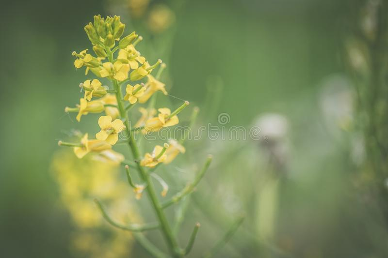 Close-up Photo of Yellow Petaled Flower stock image