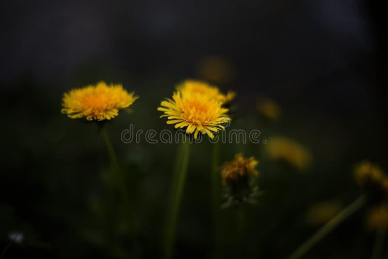 Close Up Photo Of Yellow Petaled Flower Free Public Domain Cc0 Image