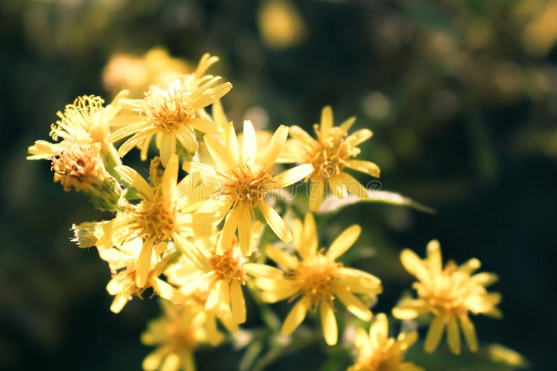 Close-Up Photo of Yellow Petaled Flowers royalty free stock photography