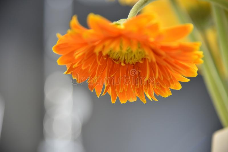 Close-up Photograph of Orange Petaled Flowers royalty free stock images