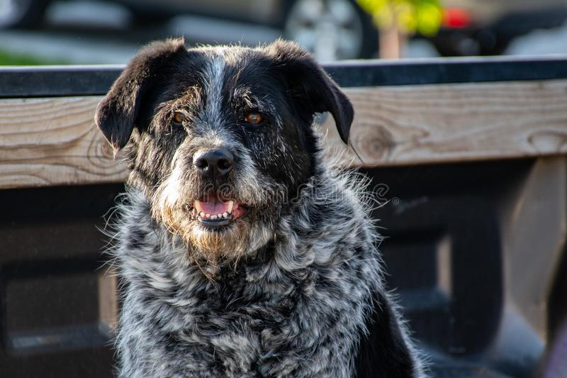 Close-Up Photography of Black Dog royalty free stock images