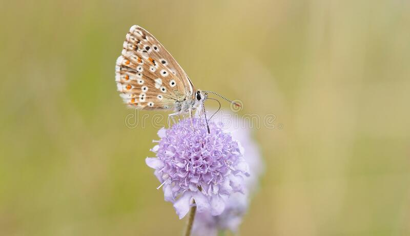 Close Up Photography of Blue Butterfly on Purple stock images