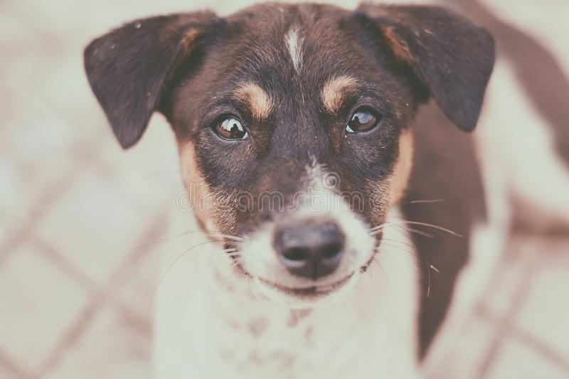 Close-Up Photography of a Dog stock photography