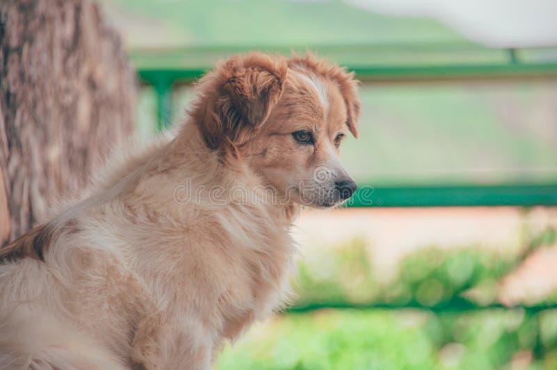 Close-Up Photography of Dog stock photos