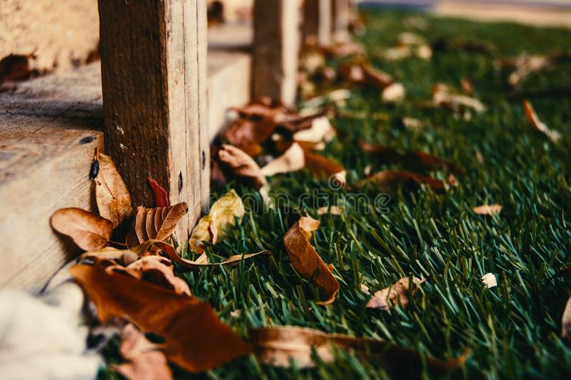 Close-up Photography of Dried Leaves royalty free stock images