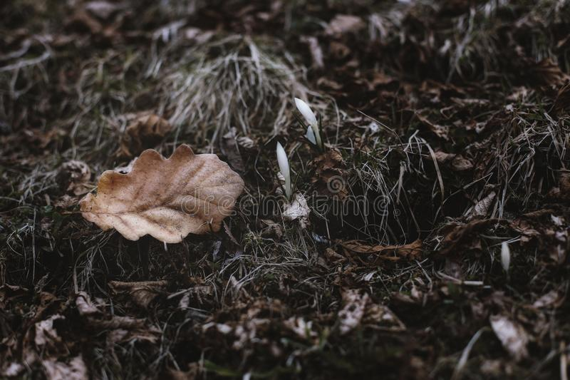 Close-Up Photography of Dry Leaves royalty free stock photos