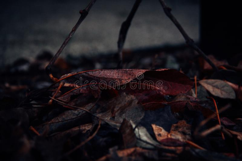 Close-Up Photography of Fallen Leaves royalty free stock photo