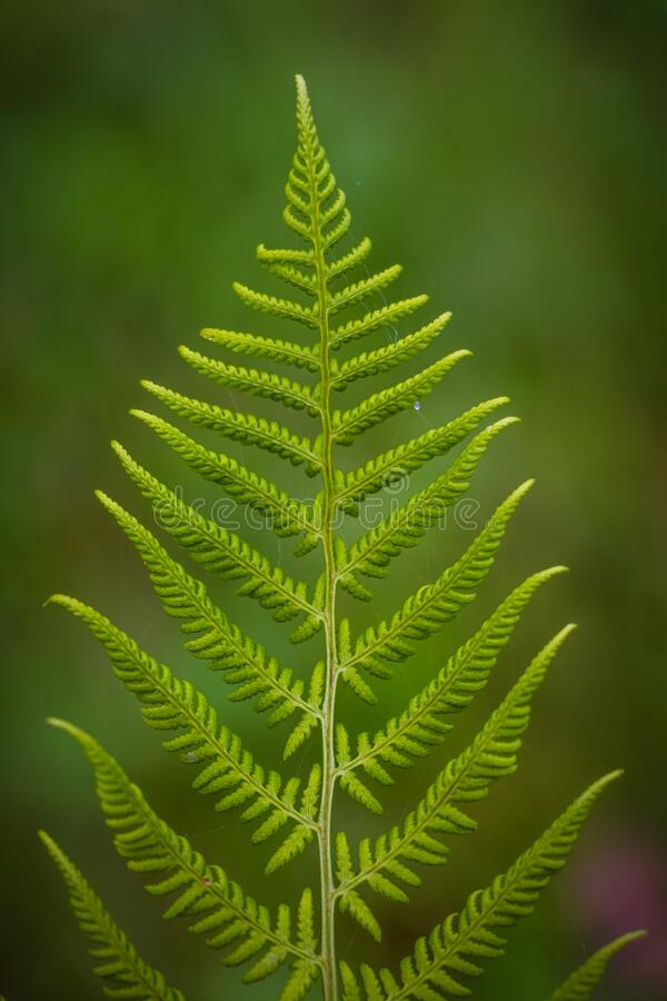 Close Up Photography Of Fern Plant Free Public Domain Cc0 Image