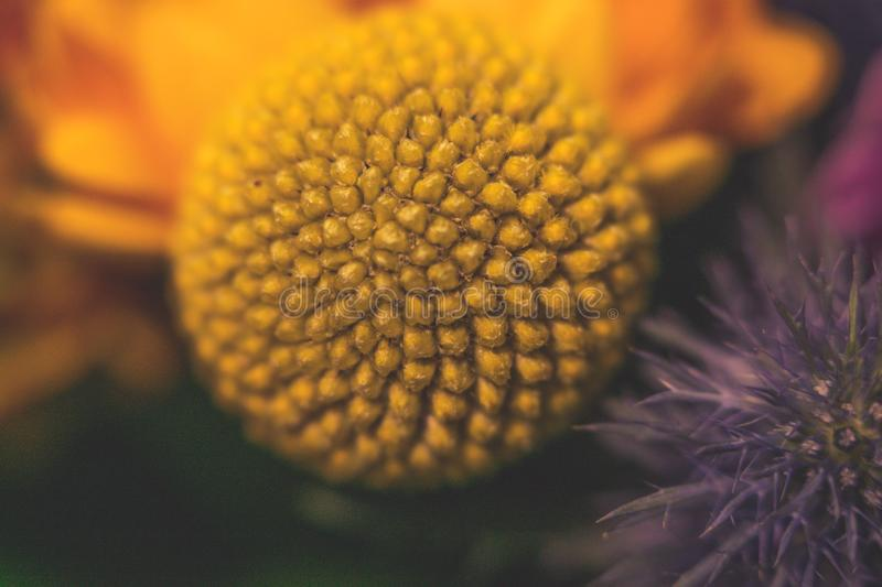 Close up photography on a flower in a bouqet royalty free stock photo
