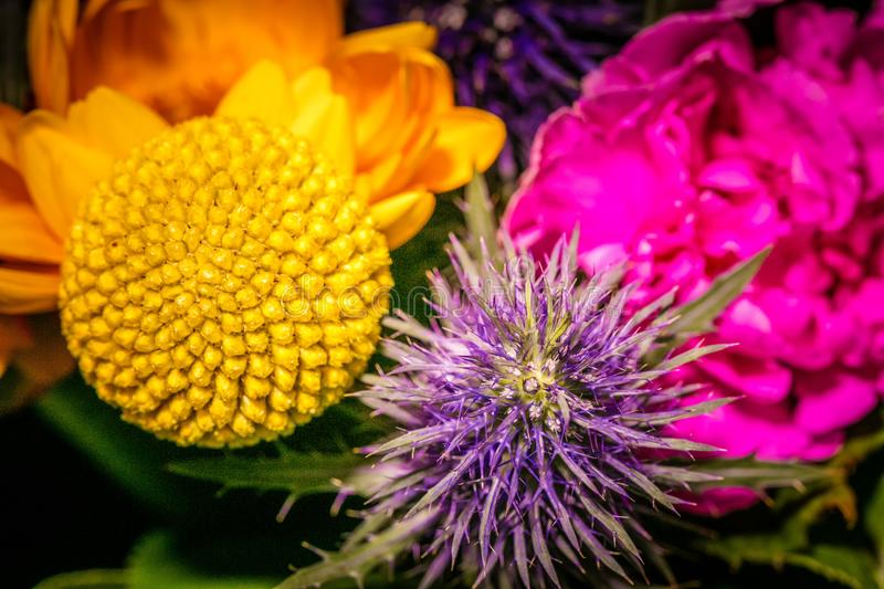 Close up photography on a flower in a bouquet royalty free stock image