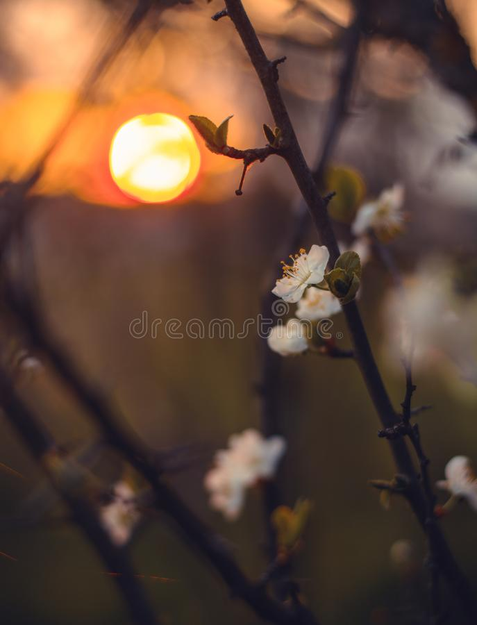 Close-Up Photography of Flowers During Sunset royalty free stock images