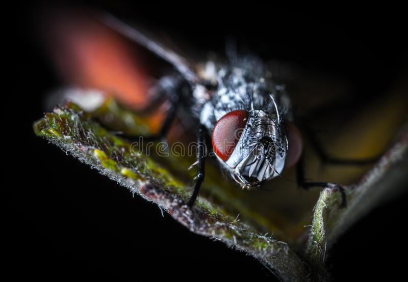 Close-up Photography Fly on Green Leaf Plant royalty free stock photo
