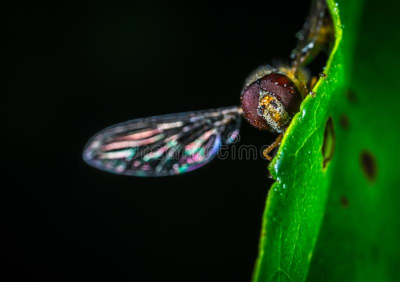 Close-up Photography of Fly on Green Leaf Plant stock image