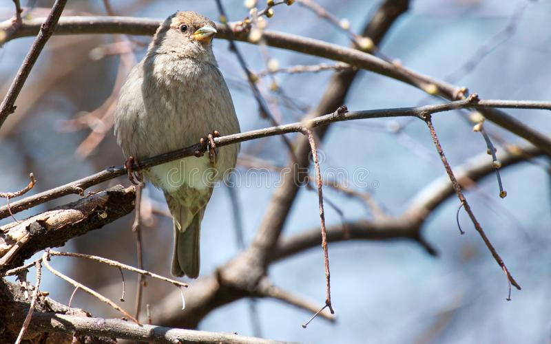 Close-up Photography of Gray Bird Perching on Twig royalty free stock photography