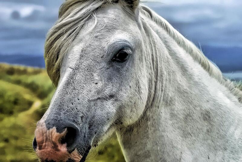 Close Up Photography Of Gray And White Horse Free Public Domain Cc0 Image