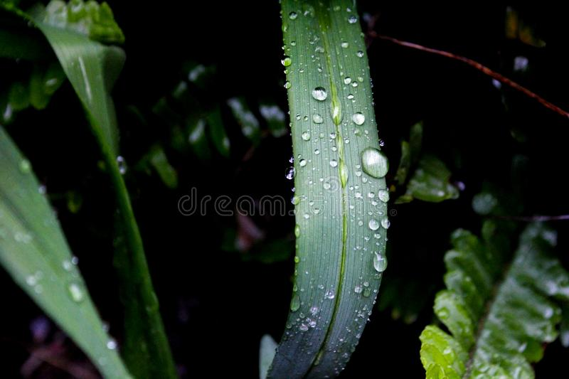 Close-up Photography of Green Leaf Plant With Water Dew stock images