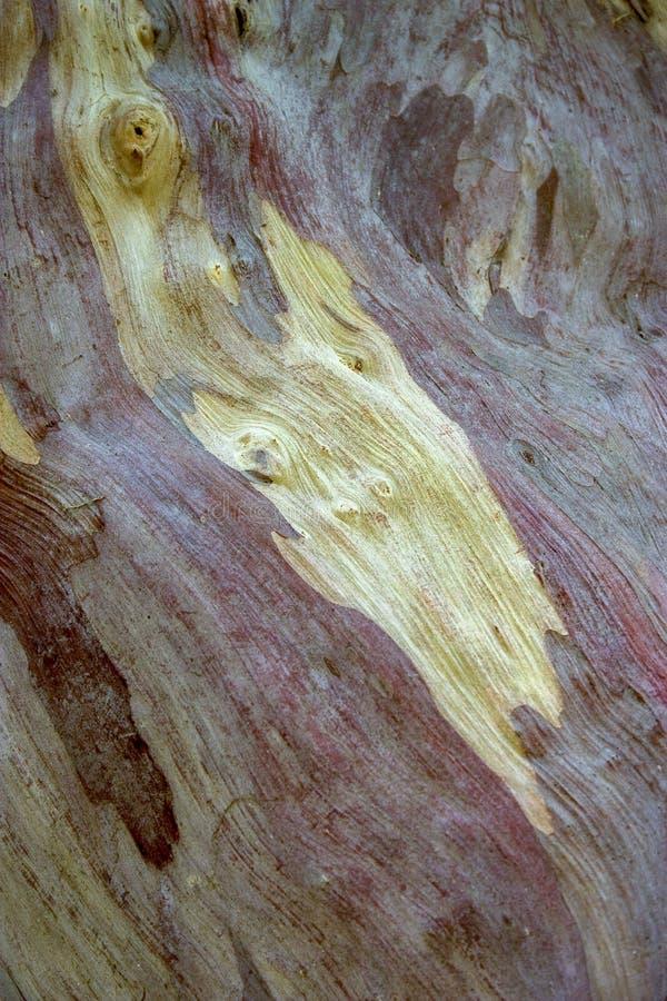 Close-up photography of the guava tree bark royalty free stock photo
