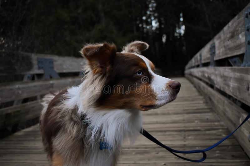 Close-Up Photography of Hairy Dog royalty free stock photography