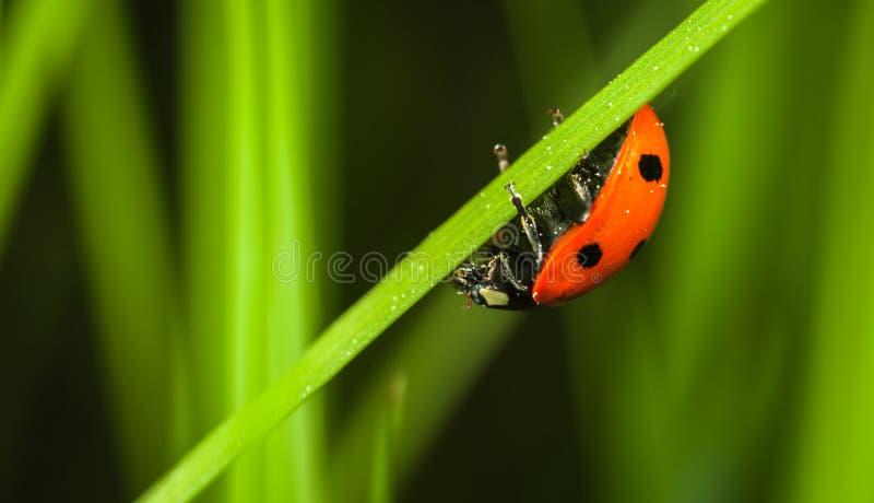 Close-up Photography of Ladybug stock images