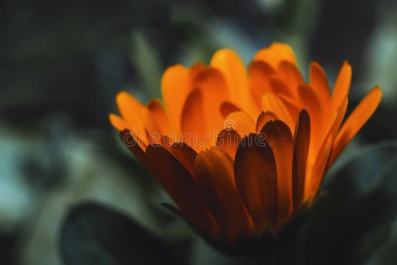 Close-Up Photography of Orange Flower stock images