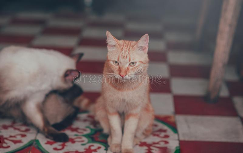 Close-Up Photography of Orange Tabby Cat stock photo