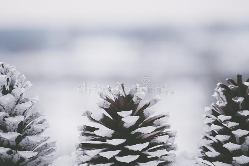 Close-up Photography Of Pine Cones Free Public Domain Cc0 Image