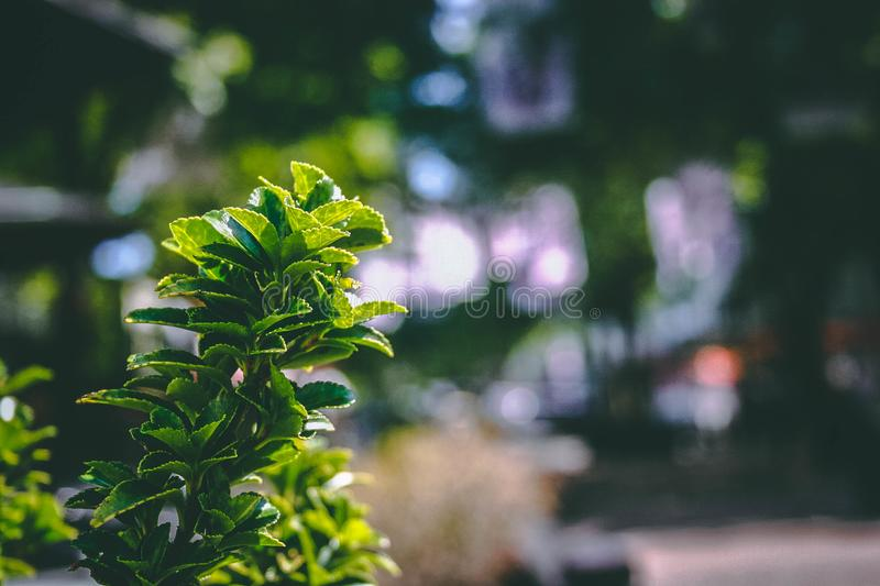 Close-Up Photography of Plant stock photography