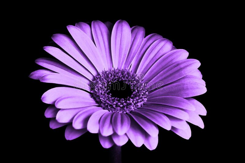 Close Up Photography of Purple Petaled Flower royalty free stock photography