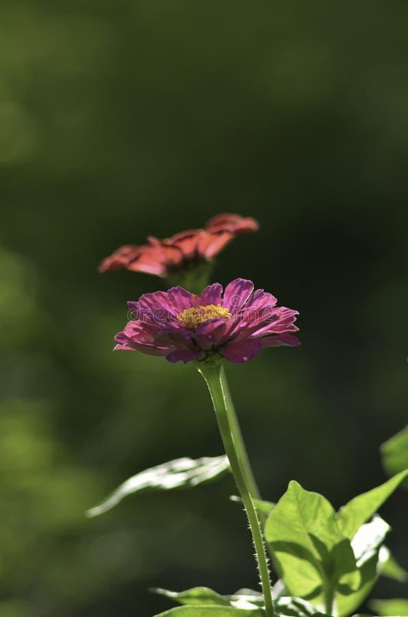 Close Up Photography of Purple Petaled Flower Near Orange Petaled Flower stock photos
